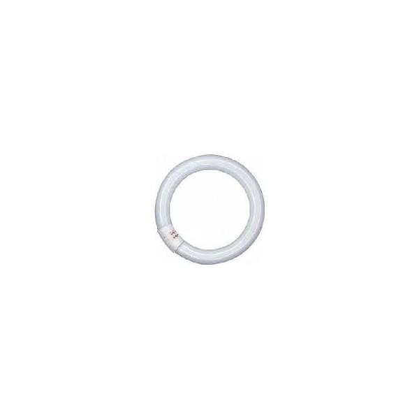 1581105 TUBO CIRCULAR 22W/865 CG10Q FLH1