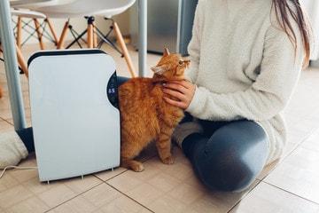 Purificador de aire elimina ácaros de mascotas